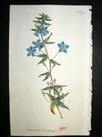 Curtis 1795 Hand Col Botanical Print. Italian Pimpernel 319